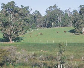Scenic Drives - Bunbury Collie Donnybrook - Accommodation Coffs Harbour