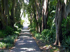 Adelaide Botanic Garden - Accommodation Coffs Harbour