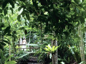 Flecker Botanic Gardens - Accommodation Coffs Harbour