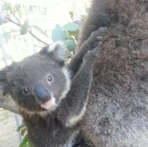 West Oz Wildlife Petting Zoos - Accommodation Coffs Harbour